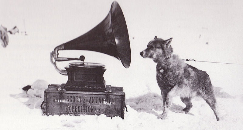 "Figure 1 - Herbert Ponting's ""Sled dog listening to gramophone, 1910."" From the Wikicommons and in the public domain."