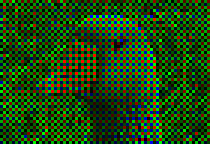 Figure 2 - Image acquired with a CCD chip through a Bayer filter.  From the Wikicommons and in the public domain.