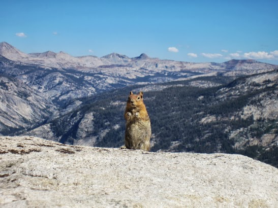 Figure 3 - Apathetic squirrel above the Yosemite Valley, (c) SR 2013 and  reproduced with permission.