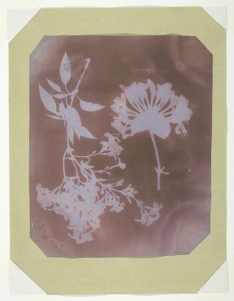 Figure 1 - Photogram by William Henry Fox Talbot  Angličan, 1800-1877 Two Plant Specimens, 1839 Photogenic drawing, stabilized (fixed) in ammonia or potassium bromide 22.1 x 18.0 cm Edward E. Ayer Endowment in memory of Charles L. Hutchinson, 1972.325 From the Wikimedia Commons and in the public domain. Original soutrce  http://www.artic.edu/aic/collections/artwork/38930