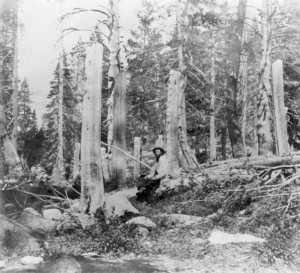 Figure 1 - Summit Peak, California in 1866 showing the tree stumps cut by the Donner Party in 1846 at the snow line.  From the LOC via Wikimedipedia and in the public domain.