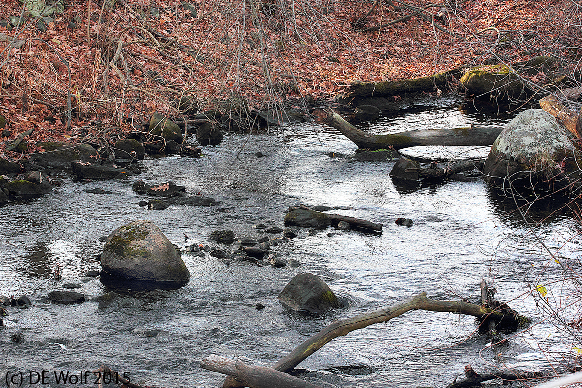 Figure 1 - Landham Brook behind Old Mill Village, Sudbury, MA, the day after Thanksgiving 2015. (c) DE Wolf 2015.