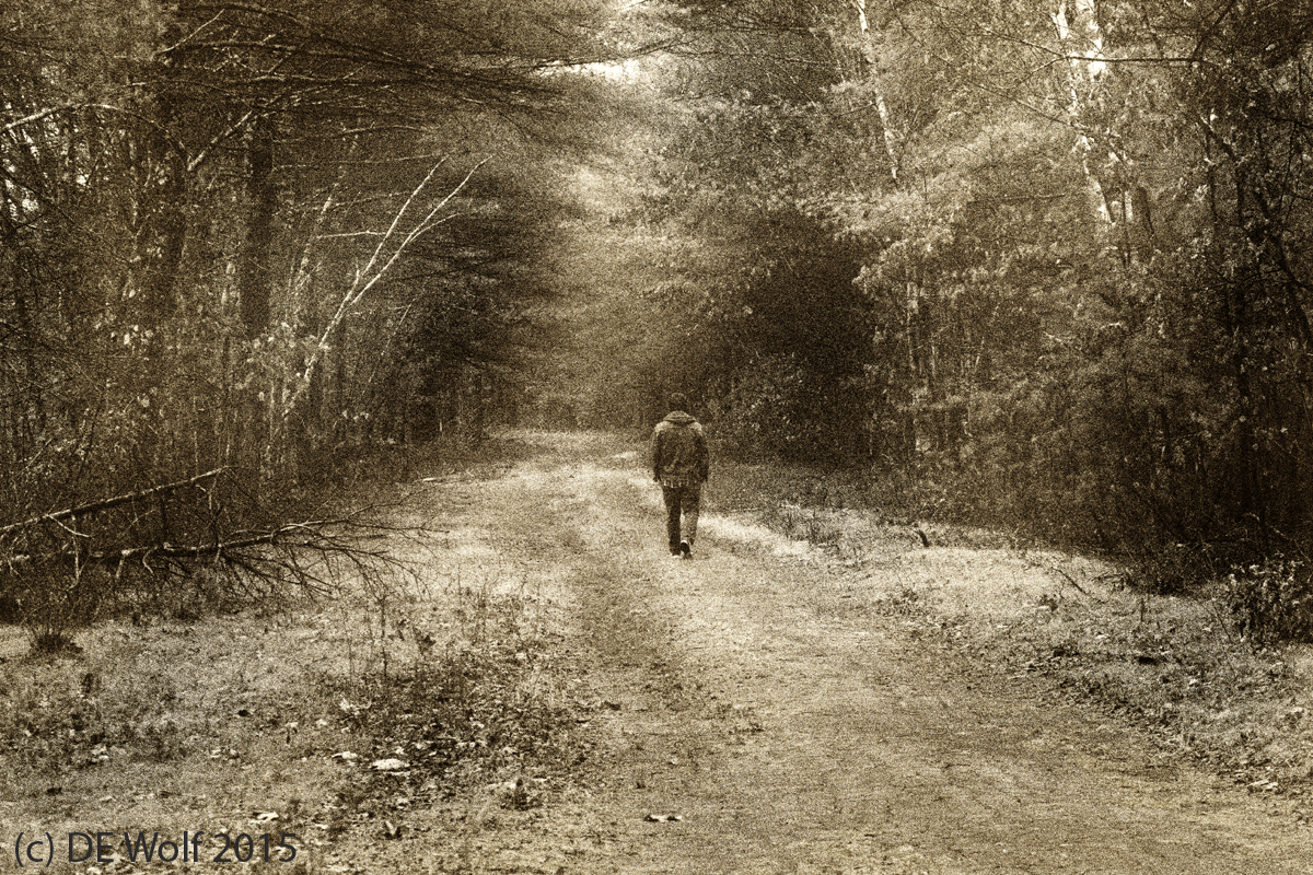 Figure 1 - Phto-pictorialism study #2 - The path to the New Year. Assabet River Wildlife Refuge. (c) DE Wolf 2015.