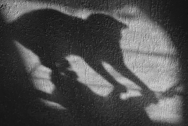 Figure 1 - Cat shadow by Velarius Geng and licensed under the Creative Commons Attribution-Share Alike 3.0 Unported license.