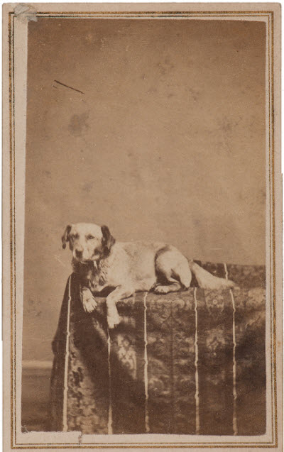 [Image: Lincoln-Fido-dog-CDV.jpg]