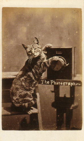 Figure 2 - Cat Photographer from Harry Pointer's Brighton Cats c. 1870. In the public domain in the United States because of its age.