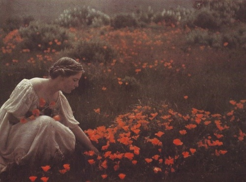 "Figure 1 - Arnold Genthe Helen MacGowan Cooke picking California golden poppies in a field, 1906."" From the LOC and in the public domain in the United States because of its age."